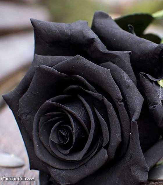 مجموعه عکس پروفایل گل | عکس گل های زیبا و عاشقانه برای پروفایل