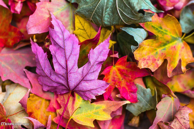 پاییزی mehalood 1 - مجموعه متن پاییزی برای اینستاگرام