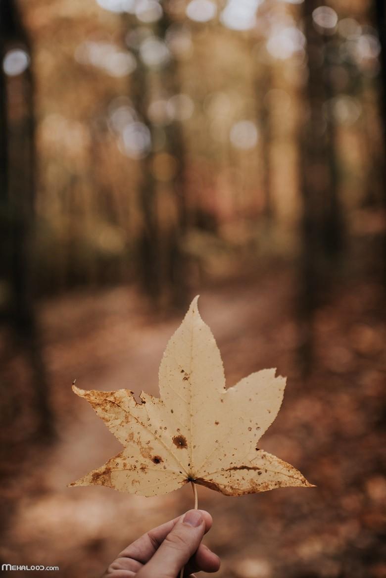 پاییزی mehalood 5 - مجموعه متن پاییزی برای اینستاگرام